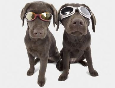 Óculos de sol para o dog - Vibe - Estilo   AreaH   Site Masculino 478c312d90