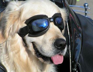 Óculos de sol para o dog - Vibe - Estilo - Foto 2   AreaH   Site ... 5cde66b452