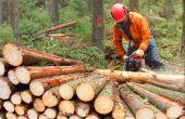 O trabalho com madeiras, tradicional para alguns homens do campo, também se tornou esporte