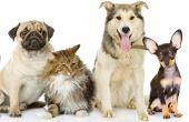 Quando o assunto é provérbio, até gato, cachorro e pato entram na história