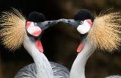 O beijo aplaca o estresse e libera endorfina