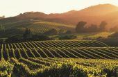 Gosta de vinho? Um dos destinos mais procurados da rota de vinícolas americana, Napa Valley, talvez deixe de existir nos próximos anos